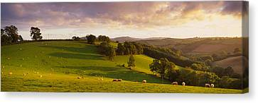 High Angle View Of Sheep Grazing Canvas Print by Panoramic Images