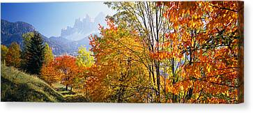 High Angle View Of Trees In A Forest Canvas Print