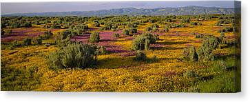 Sonoma Valley Canvas Print - High Angle View Of Wildflowers In A by Panoramic Images