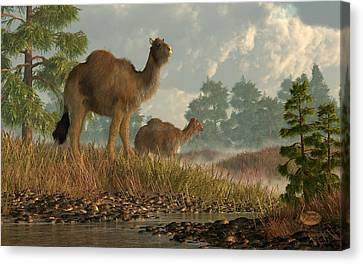 High Arctic Camel Canvas Print