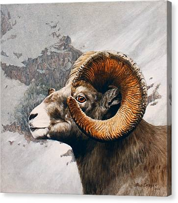 High Country Bighorn Canvas Print by Rob Dreyer