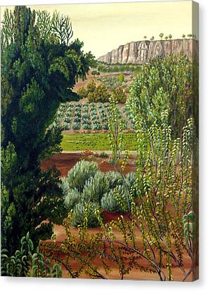 High Mountain Olive Trees  Canvas Print by Angeles M Pomata