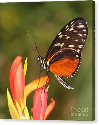 High Upon A Flower Canvas Print by Ruth Jolly