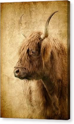 Highland Bull Canvas Print by Athena Mckinzie
