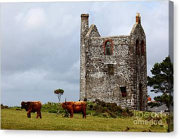 Highland Cattle And Ruined Tin Mine  Canvas Print by James Brunker
