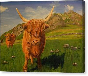 Highland Coos Canvas Print by Kelly Bossidy