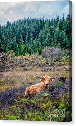 Wavy Canvas Print - Highland Cow by Adrian Evans