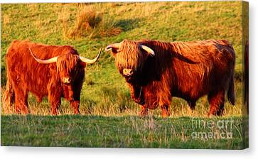 Highland Cattle Canvas Print by JM Braat Photography