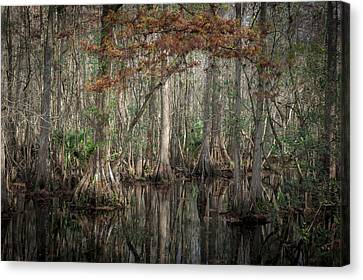 Highland Hammocks State Park Florida    Canvas Print