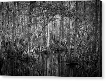 Highland Hammocks State Park Florida Bw Canvas Print by Rich Franco