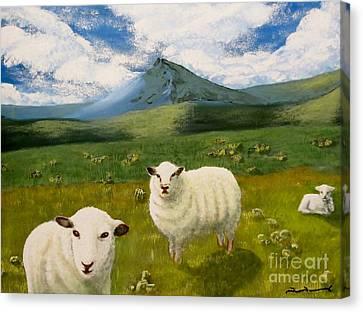 Highlands Sheep Canvas Print by Tim Townsend