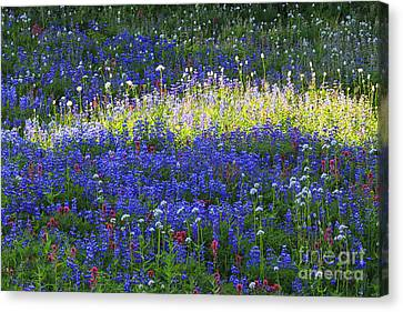 Highlight Of Wild Flowers Canvas Print by Mark Kiver