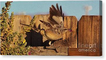 Hightail It Out Of There Canvas Print