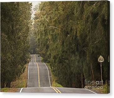 Highway 250 Canvas Print by Inge Riis McDonald