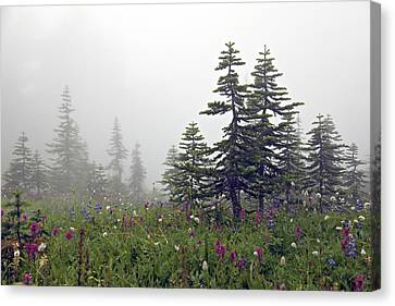 Hiking In The Clouds Canvas Print