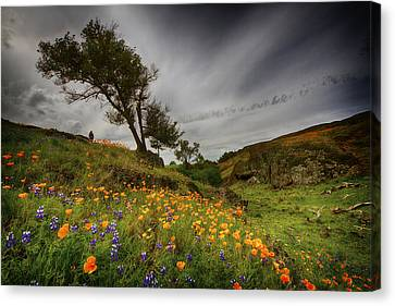 Hiking On Table Mountain Canvas Print