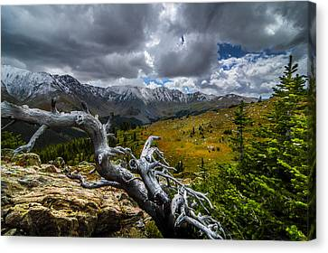 Aspen Trees Canvas Print - Hiking Over Loveland Pass by Michael J Bauer