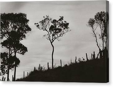 Hill Canvas Print by Amarildo Correa