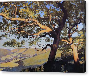 Hill Country Canvas Print by Andrew Danielsen
