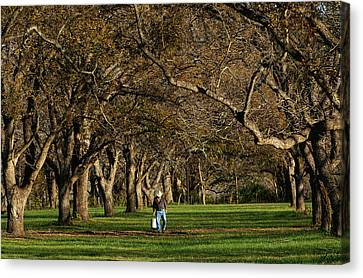 Hill Country Harvest Canvas Print by Bill Morgenstern