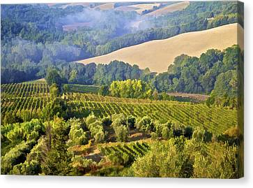 Hills Of Tuscany Canvas Print by David Letts