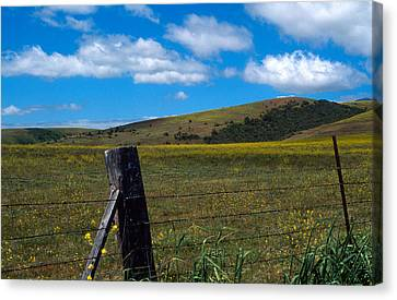 Hills Of Yellow Canvas Print by Kathy Yates