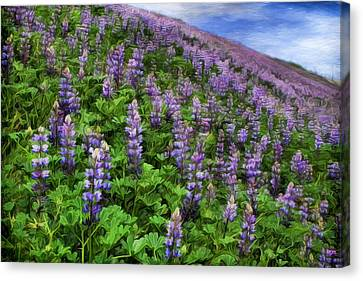 Hillside Lupines Canvas Print by Donna Kennedy