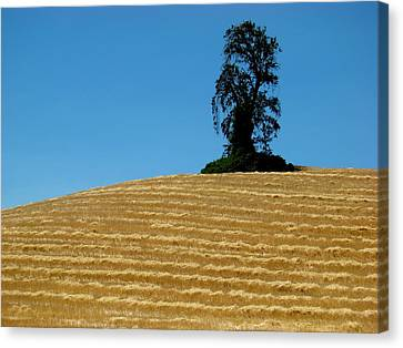 Canvas Print featuring the photograph Hillside Protector by Paul Foutz