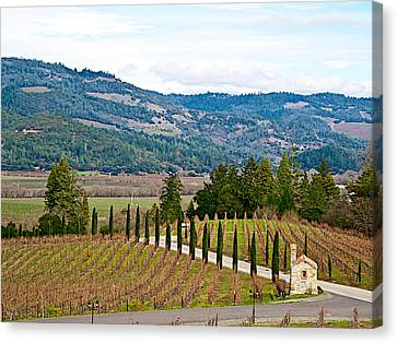 Hillside Vineyard In Front Of Castello Di Amorosa In Napa Valley-ca Canvas Print by Ruth Hager
