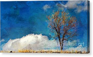 Hilltop Tree Canvas Print by Barbara Chichester