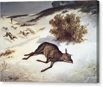 Hind Forced Down In The Snow Canvas Print by Gustave Courbet