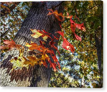 Hints Of Fall Canvas Print by Linda Unger