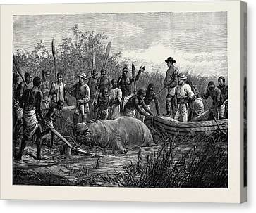 Hippopotamus Hunting In Angola West Africa 1880 Canvas Print by English School