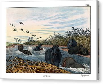 Hippopotamus Canvas Print by Splendid Art Prints