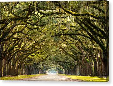 Historic Wormsloe Plantation Oak Trees Canvas Print