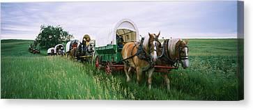 Historical Reenactment, Covered Wagons Canvas Print