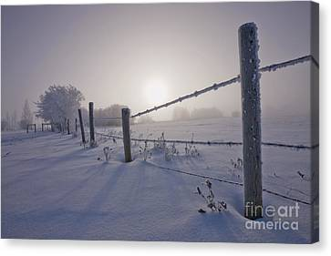Hoar Frost And Barbed Wire Fence Canvas Print