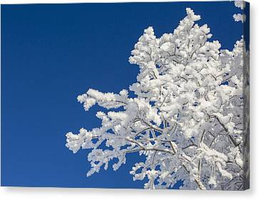 Hoar Frost And Clear Skies Canvas Print by Tim Grams