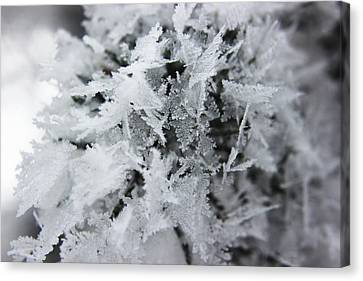 Hoar Frost In November Canvas Print