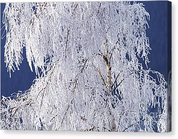 Hoar Frost On Tree Canvas Print