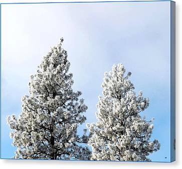 Hoarfrost 21 Canvas Print by Will Borden