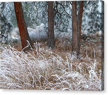 Hoarfrost 22 Canvas Print by Will Borden