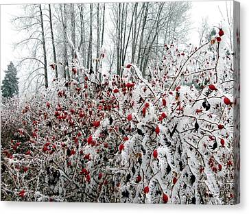 Hoarfrost 25 Canvas Print by Will Borden