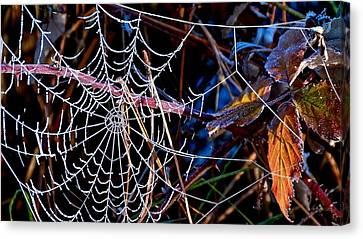 Canvas Print featuring the photograph Hoary Web by Julia Hassett