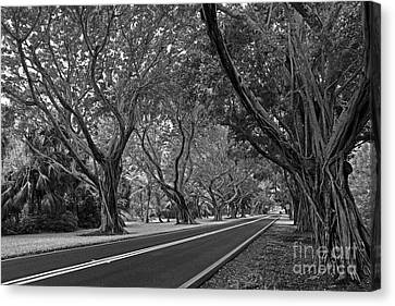 Canvas Print featuring the photograph Hobe Sound Bridge Rd. West II by Larry Nieland