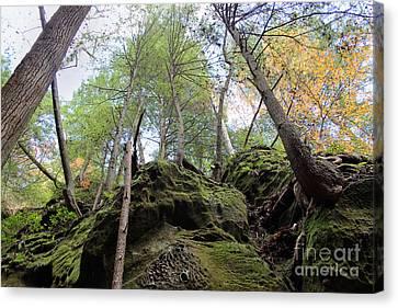 Hocking Hills Moss Covered Cliff Canvas Print by Karen Adams