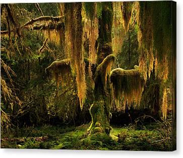Hoh Rain Forest Canvas Print by Leland D Howard