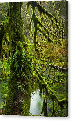 Hoh Rainforest 2 Canvas Print