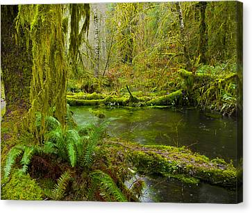 Hoh Rainforest 3 Canvas Print by Joe Doherty