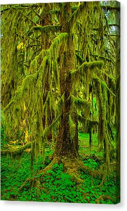 Hoh Rainforest Heavy Weight Canvas Print